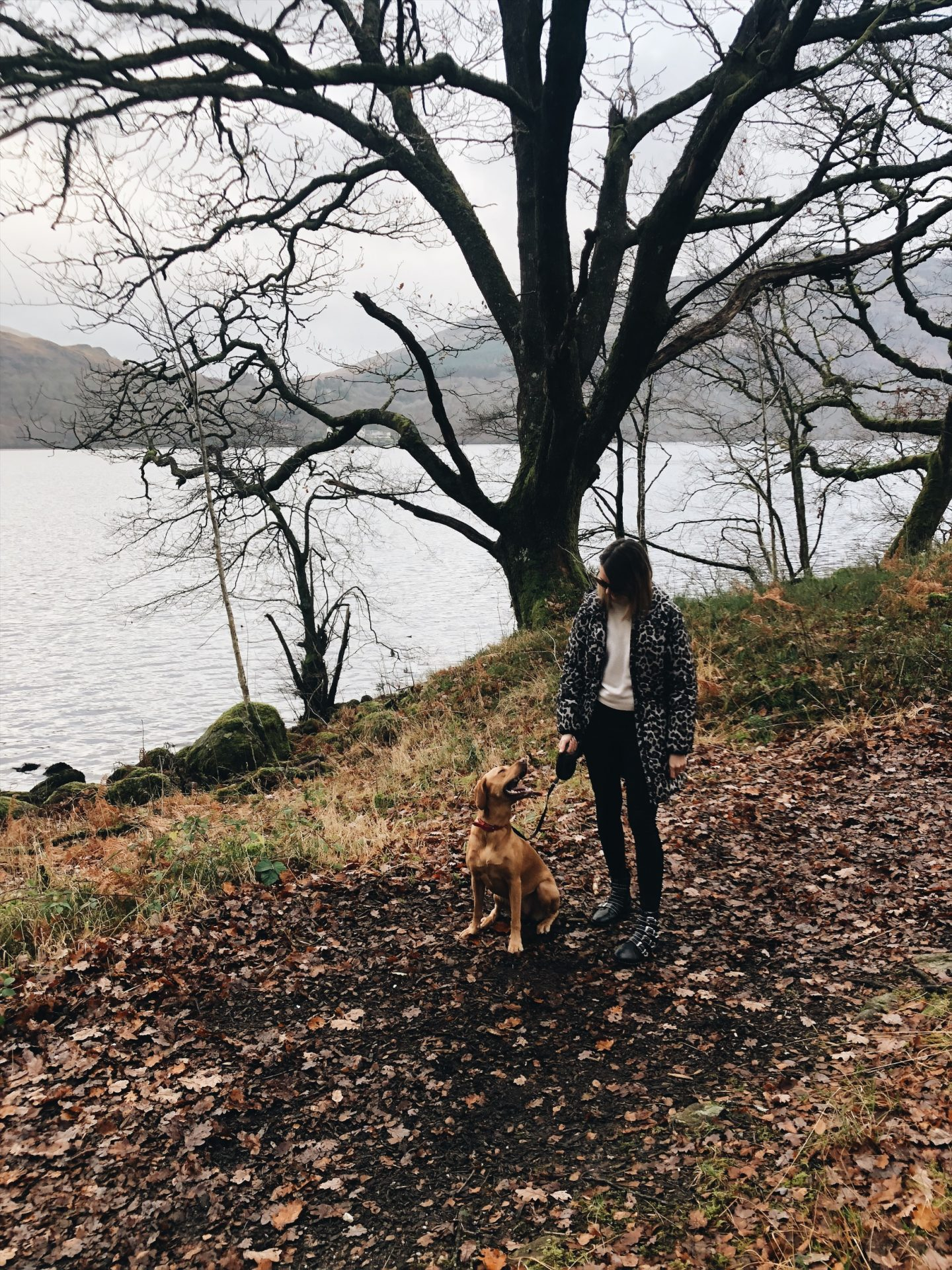 DOG-FRIENDLY LODGE STAY AT LOCH LOMOND, SCOTLAND